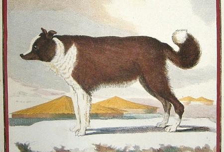 """Ilustracja z """"Histoire naturelle, générale et particulière""""."""