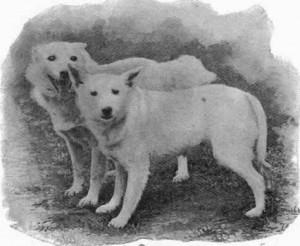 Fotografia z książki Brytyjskie wystawy psów.